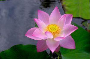 flor de loto inspiración pendientes oro plata niña bebé