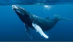 ballena inspiracion mocosa para pendientes de niña
