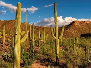 cactus para diseño de pendientes niña
