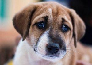 carita de perro diseño de pendientes para niña bebé oro plata