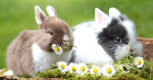 conejos inspiración diseño pendientes oro plata niña bebé rosca