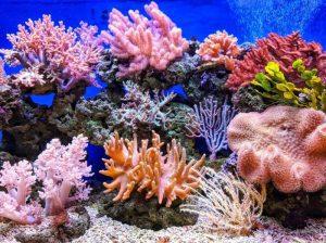 corales insipiración diseño pendientes niña bebé oro plata