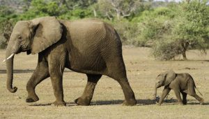 elefantes inspiración diseño pendientes bebe niña oro plata rosca