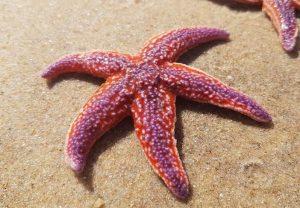 estrellas de mar inspiración diseño pendientes oro plata niña bebé