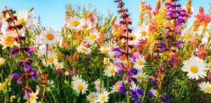 flores curiosidades inspiración pendientes niña rosca hipoalergénicos