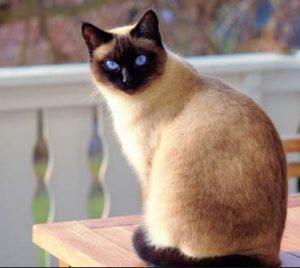 gatos diseño pendientes niña