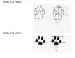 huella del perro y gato inspiración para diseño de pendientes niña zarpa
