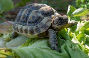 tortugas inspiración diseño pendientes bebe niña oro plata